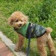 画像3: 「犬服,クールベスト」,熱中症対策 メッシュクールベスト(S〜XL) (3)