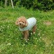 画像2: 「犬服,クールベスト」,熱中症対策 メッシュクールベスト(S〜XL) (2)
