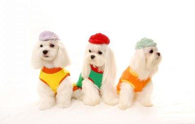 画像1: [犬の帽子]モコモコCap(S,M,L)