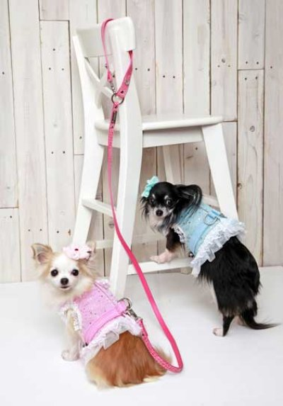 画像1: 「犬服、犬のハーネス、犬具」 スターフリルハーネス(S〜XL)