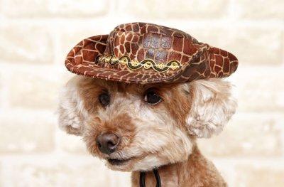 画像1: 犬 の 帽子 S M L おしゃれ ハット 春 夏 秋 冬 小型犬 中型犬 犬用 猫用 ヘビ柄 カウボーイ