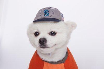 画像1: [犬の帽子]ベースボールCap(S,M,L)
