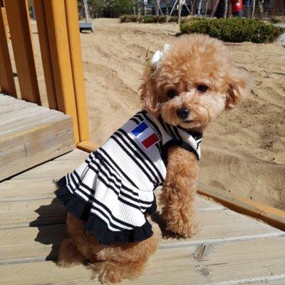 画像1: 「犬服ワンピース」 フランスVネックワンピース(XS〜XL) 即日出荷出来ます!