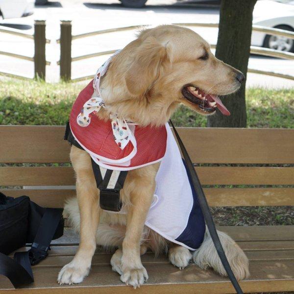画像1: 「大型犬服」 クールベスト 熱中症対策 メッシュクールベスト(3XL) (1)