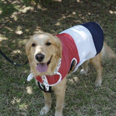 画像1: 「大型犬服」 熱中症対策 メッシュクールベスト(2XL)即日出荷出来ます!