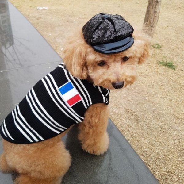 画像1: [犬服T シャツ] フランスVネック T(XS〜XL) (1)