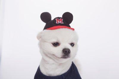 画像1: [犬の帽子]Mouse  Cap(S,M,L)