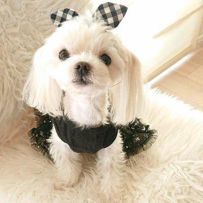 画像3: 「犬服ドレス、ワンピース 」 チュチュドレス(XS〜XL)