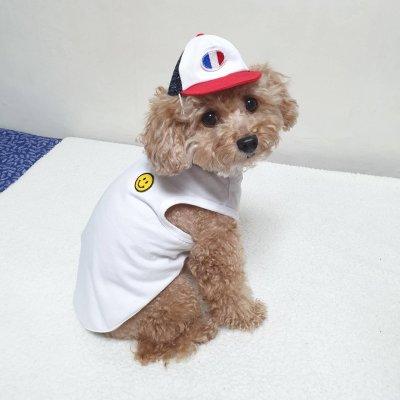 画像2: 犬の帽子 フランスベースボールCap (S,M,L) 即日出荷出来ます!