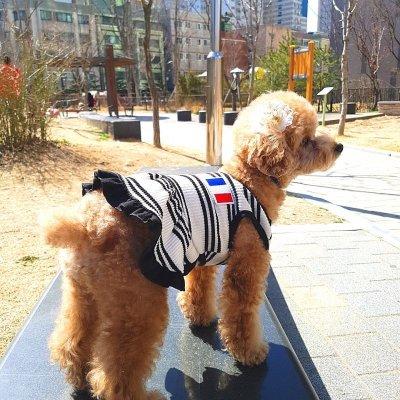 画像2: 「犬服ワンピース」 フランスVネックワンピース(XS〜XL) 即日出荷出来ます!