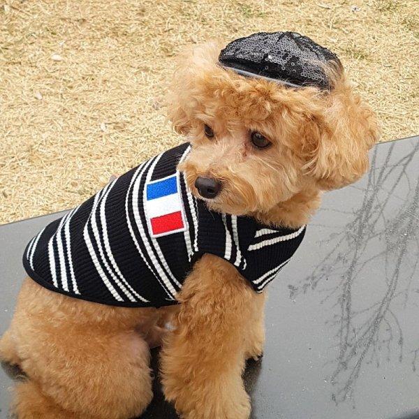 画像1: 犬服 おしゃれ ノースリーブ S M L XL 小型犬 中型犬 春夏秋冬 ボーダー Vネック Tシャツ 即日出荷出来ます (1)