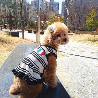 画像2: 犬服 おしゃれ ノースリーブ S M L XL 小型犬 中型犬 春夏秋冬 ボーダー Vネック Tシャツ 即日出荷出来ます
