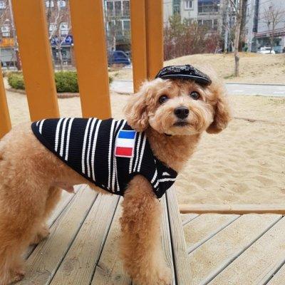 画像3: 「犬服ワンピース」 フランスVネックワンピース(XS〜XL) 即日出荷出来ます!
