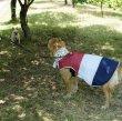 画像12: 「大型犬服」 熱中症対策 メッシュクールベスト(2XL)即日出荷出来ます! (12)