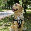 画像8: 大型 犬 ひんやり  スカーフ 2XL 中型犬 大型犬 クール 保冷剤 熱中症対策 即日 出荷出来ます (8)