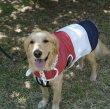 画像10: 「大型犬服」 熱中症対策 メッシュクールベスト(2XL)即日出荷出来ます! (10)