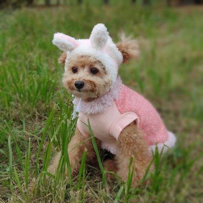 画像2: 犬 の 帽子  S M L 小型犬 中型犬 秋 冬 犬用 猫用 うさぎ トナカイ 変身 コスプレ もこもこ動物 即日発送できます