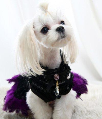 画像1: 犬のネックレス、犬のアクセサリー  レースチョーカー